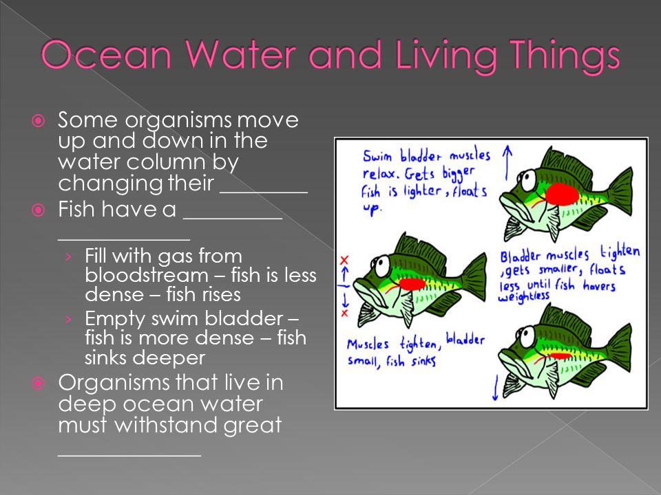Ocean Water and Living Things