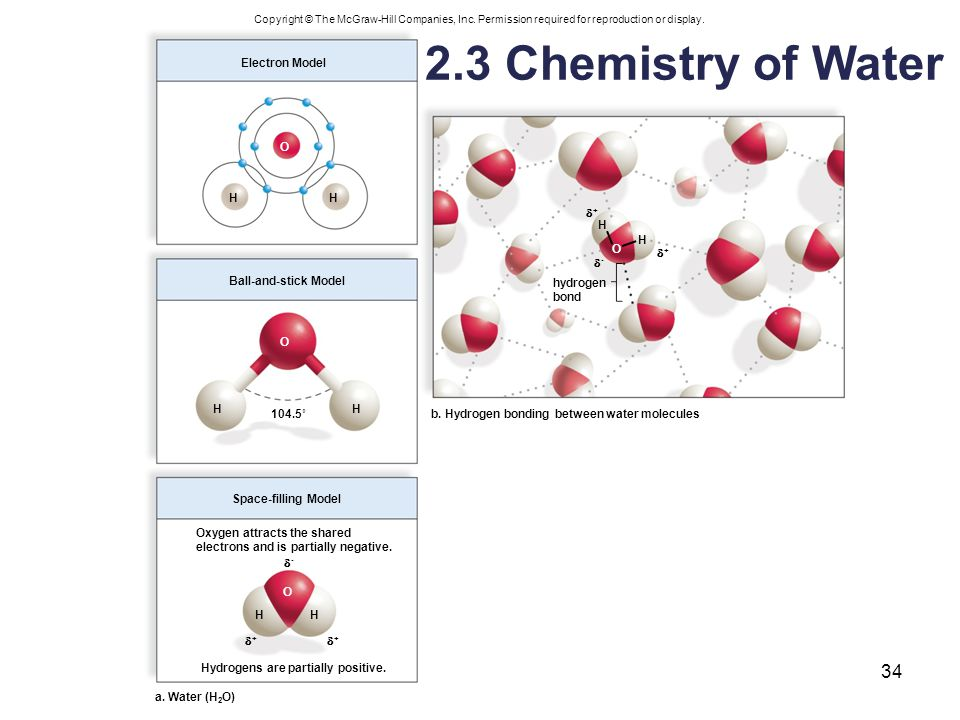 Fig. 2.9 2.3 Chemistry of Water Electron Model O H H + H H O + -
