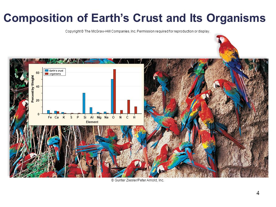 Composition of Earth's Crust and Its Organisms