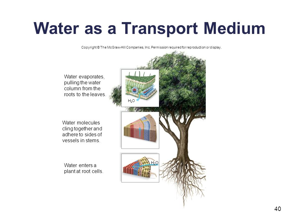 Water as a Transport Medium