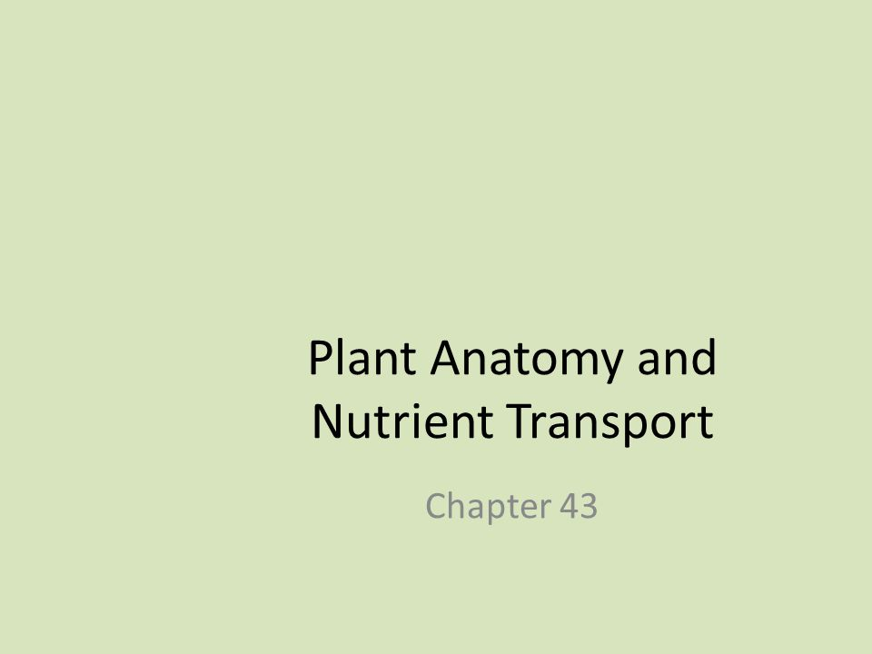 Plant Anatomy and Nutrient Transport
