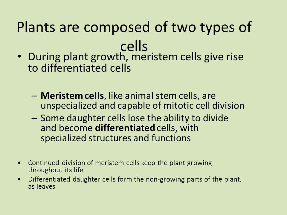 Plants are composed of two types of cells