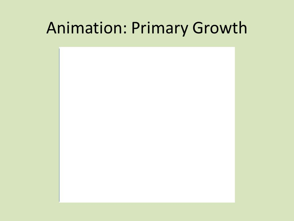 Animation: Primary Growth