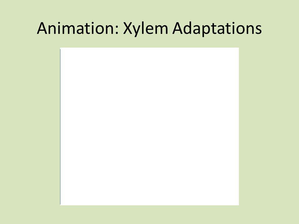 Animation: Xylem Adaptations