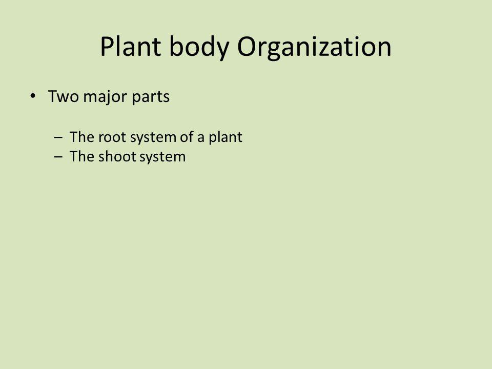 Plant body Organization