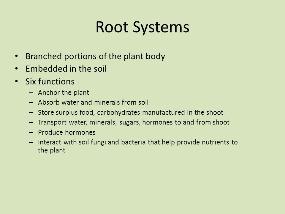 Root Systems Branched portions of the plant body Embedded in the soil