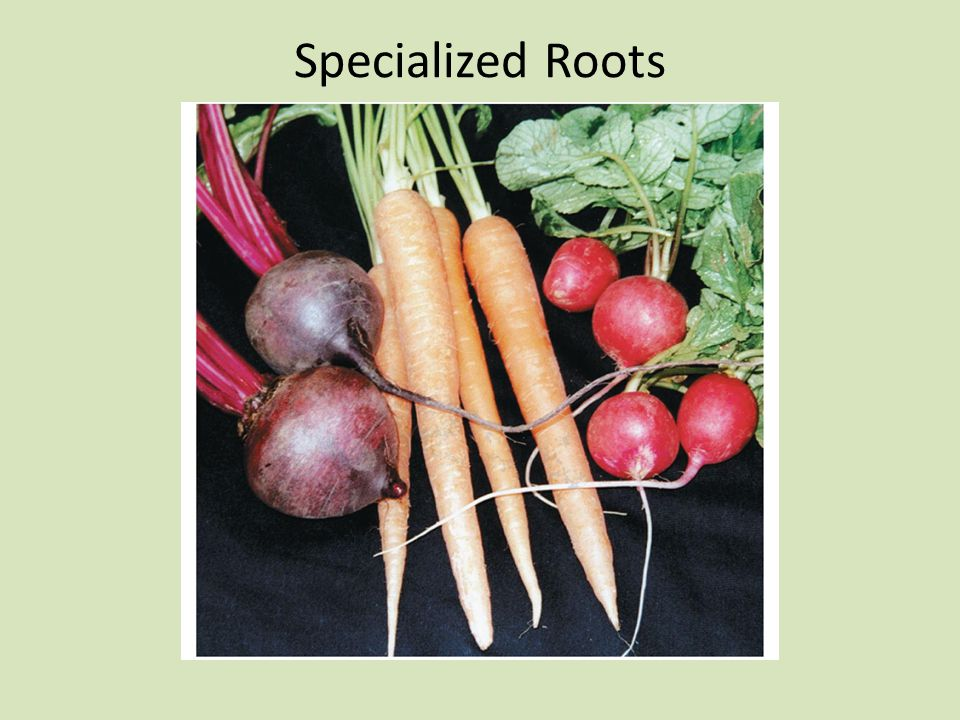 Specialized Roots