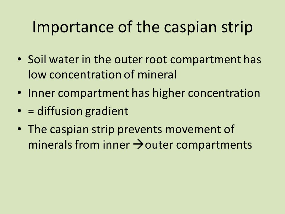 Importance of the caspian strip