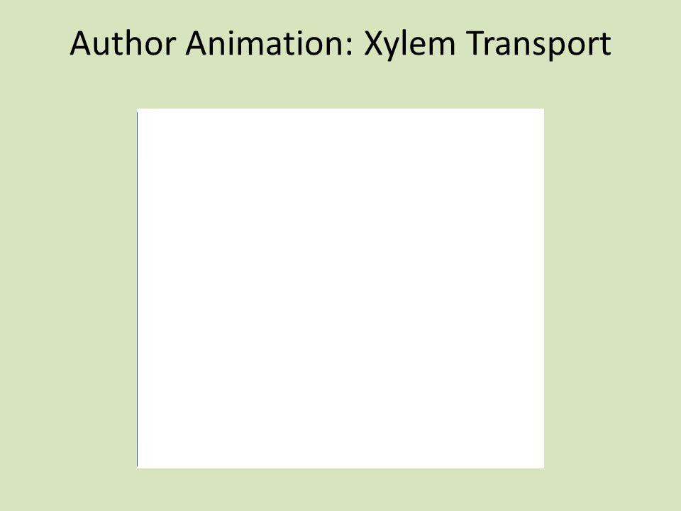 Author Animation: Xylem Transport
