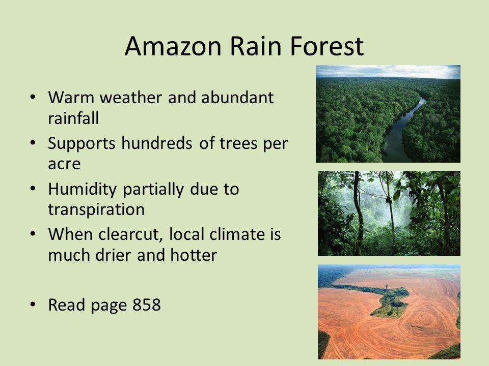 Amazon Rain Forest Warm weather and abundant rainfall