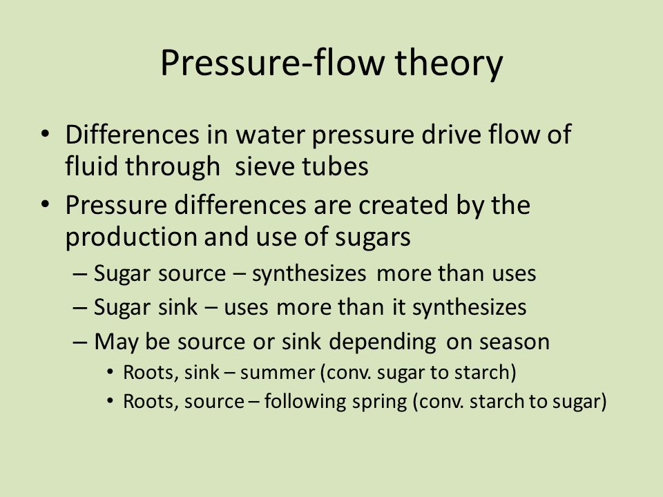 Pressure-flow theory Differences in water pressure drive flow of fluid through sieve tubes.