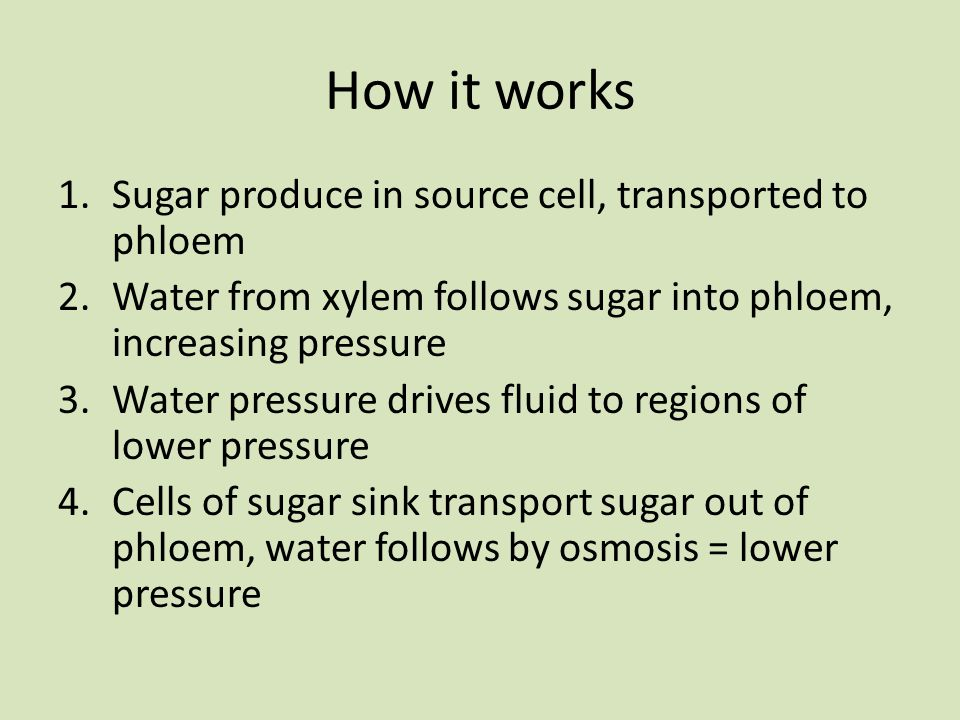 How it works Sugar produce in source cell, transported to phloem