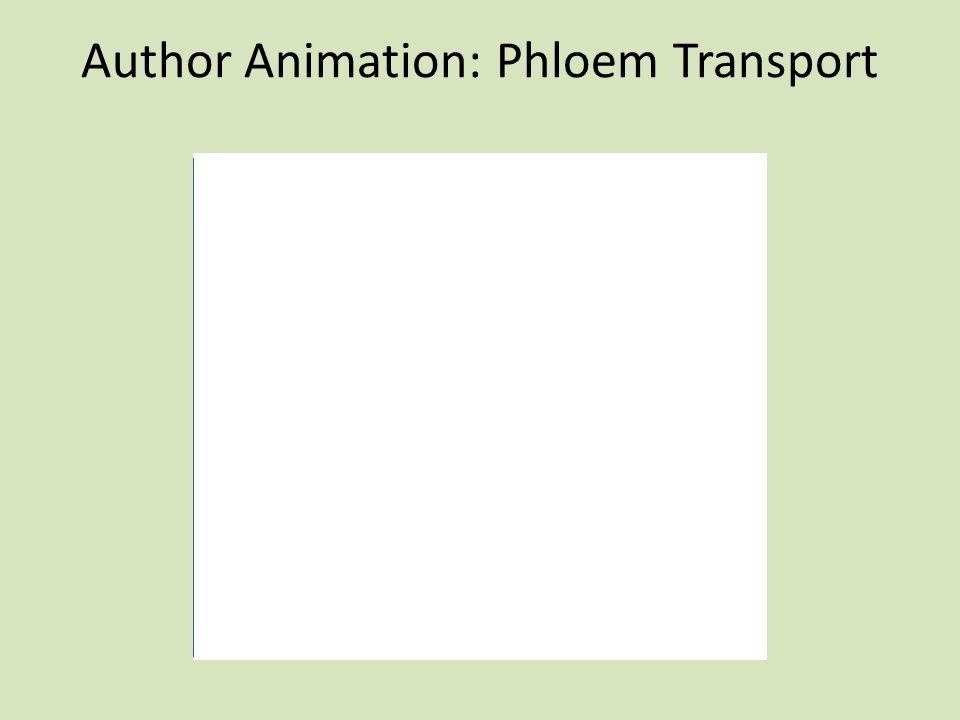 Author Animation: Phloem Transport