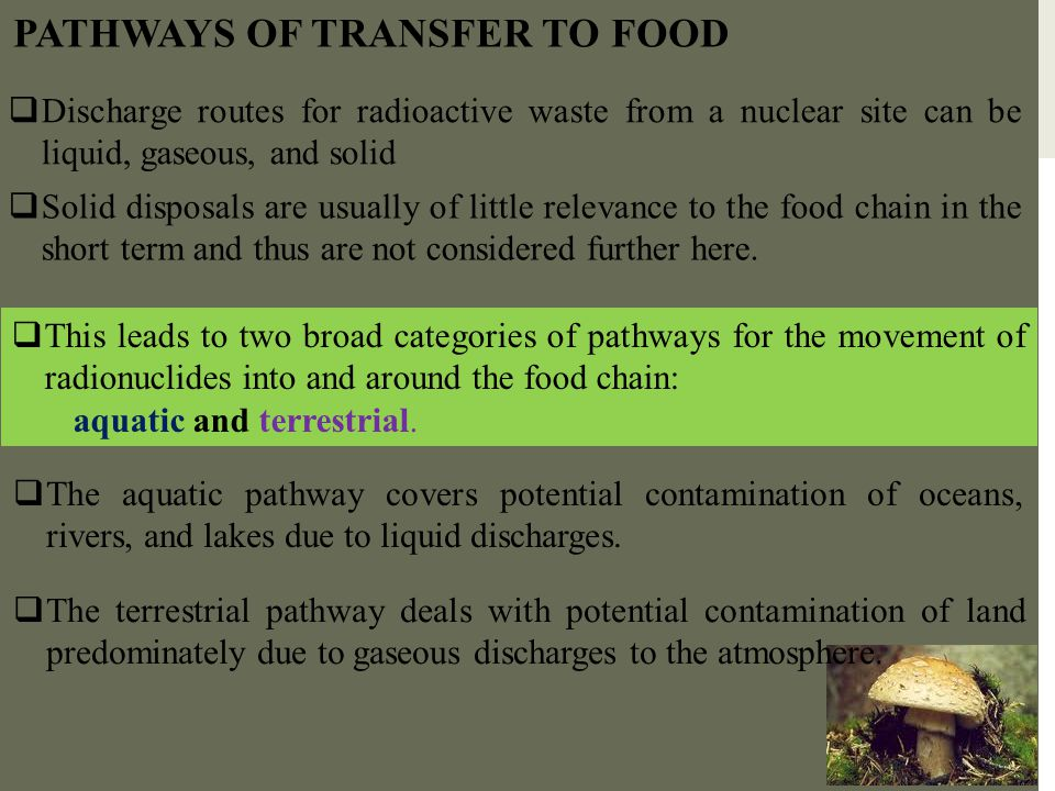 PATHWAYS OF TRANSFER TO FOOD