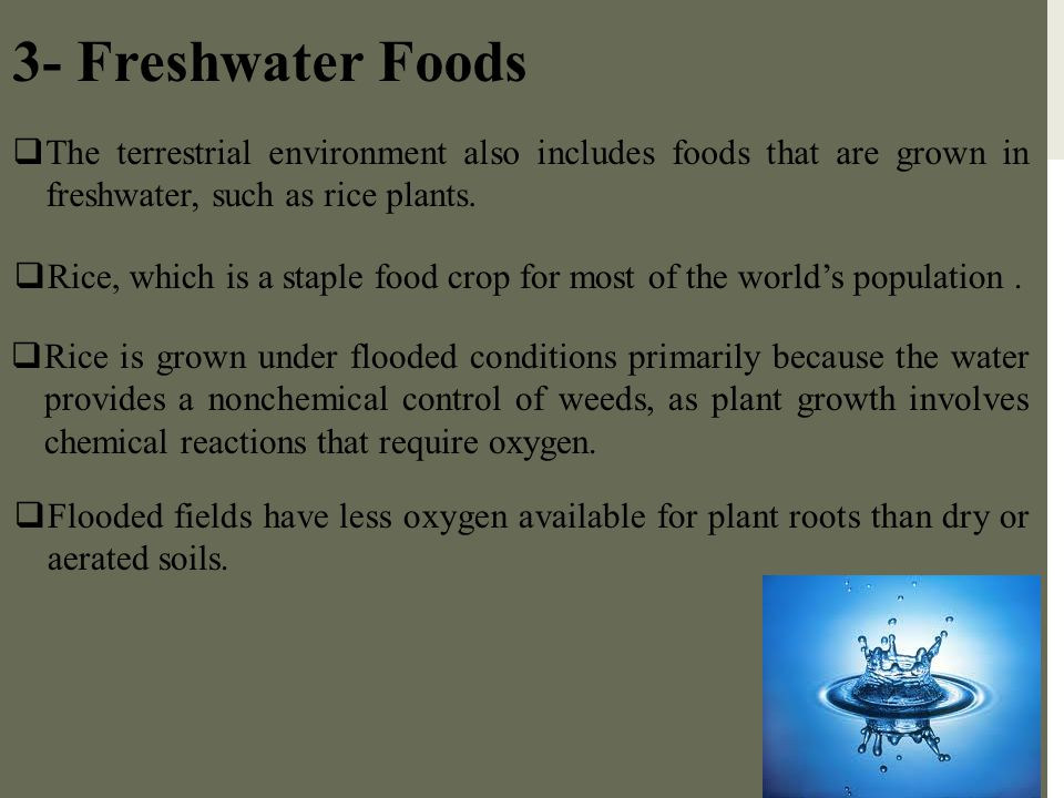 3- Freshwater Foods The terrestrial environment also includes foods that are grown in freshwater, such as rice plants.