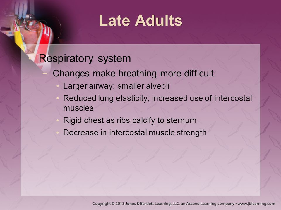 Late Adults Respiratory system Changes make breathing more difficult: