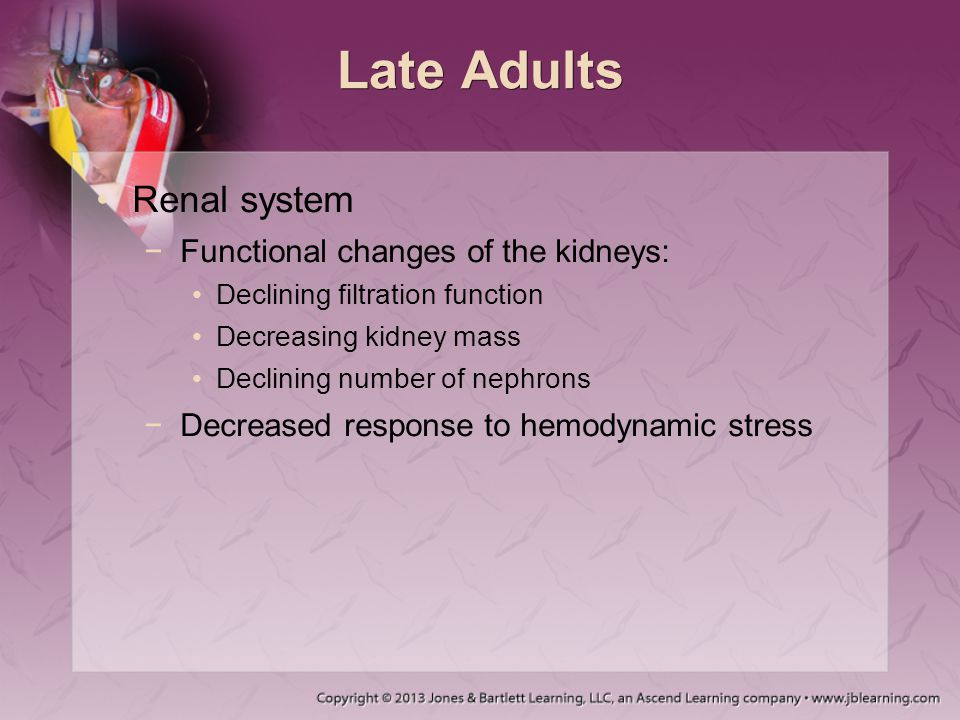 Late Adults Renal system Functional changes of the kidneys: