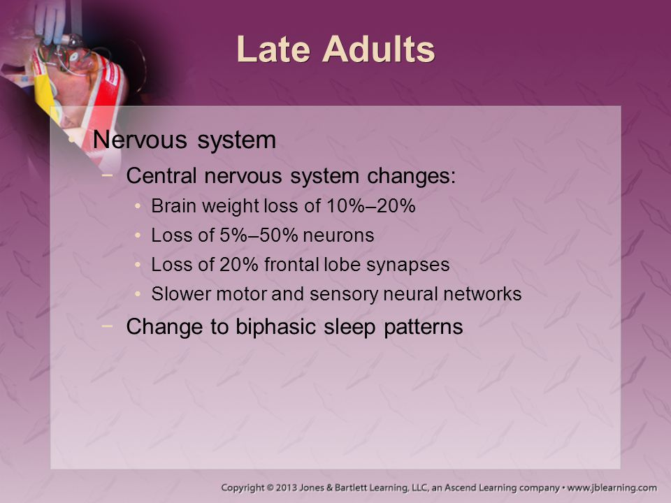 Late Adults Nervous system Central nervous system changes: