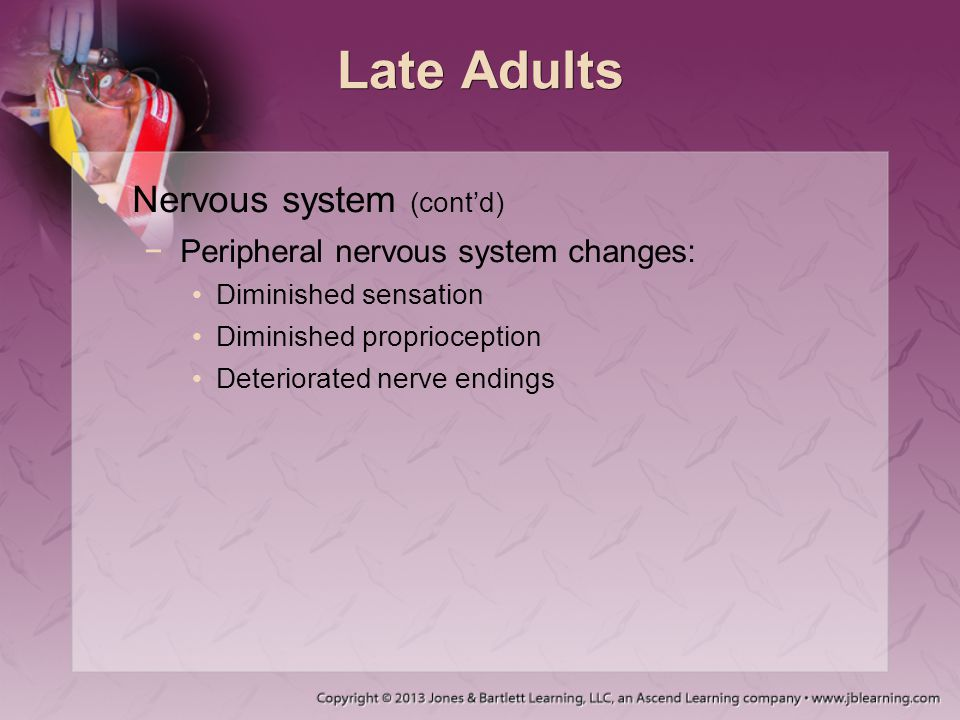 Late Adults Nervous system (cont'd) Peripheral nervous system changes: