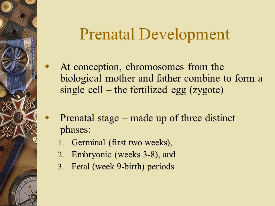 Prenatal Development At conception, chromosomes from the biological mother and father combine to form a single cell – the fertilized egg (zygote)