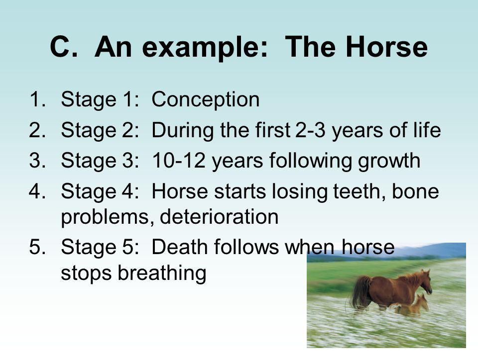 C. An example: The Horse Stage 1: Conception