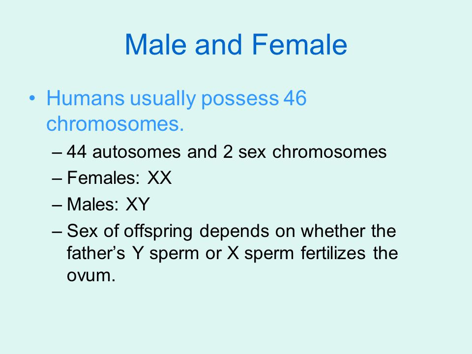 Male and Female Humans usually possess 46 chromosomes.
