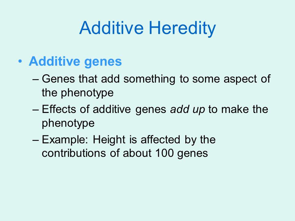 Additive Heredity Additive genes