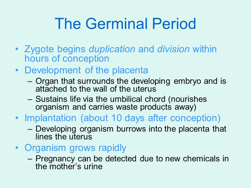 The Germinal Period Zygote begins duplication and division within hours of conception. Development of the placenta.