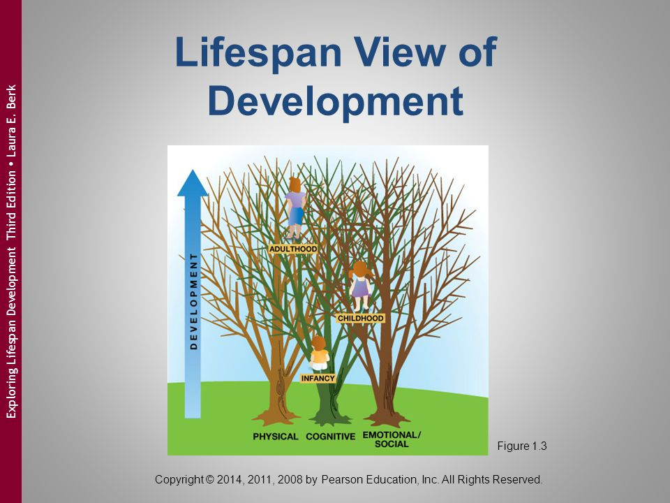 Lifespan View of Development