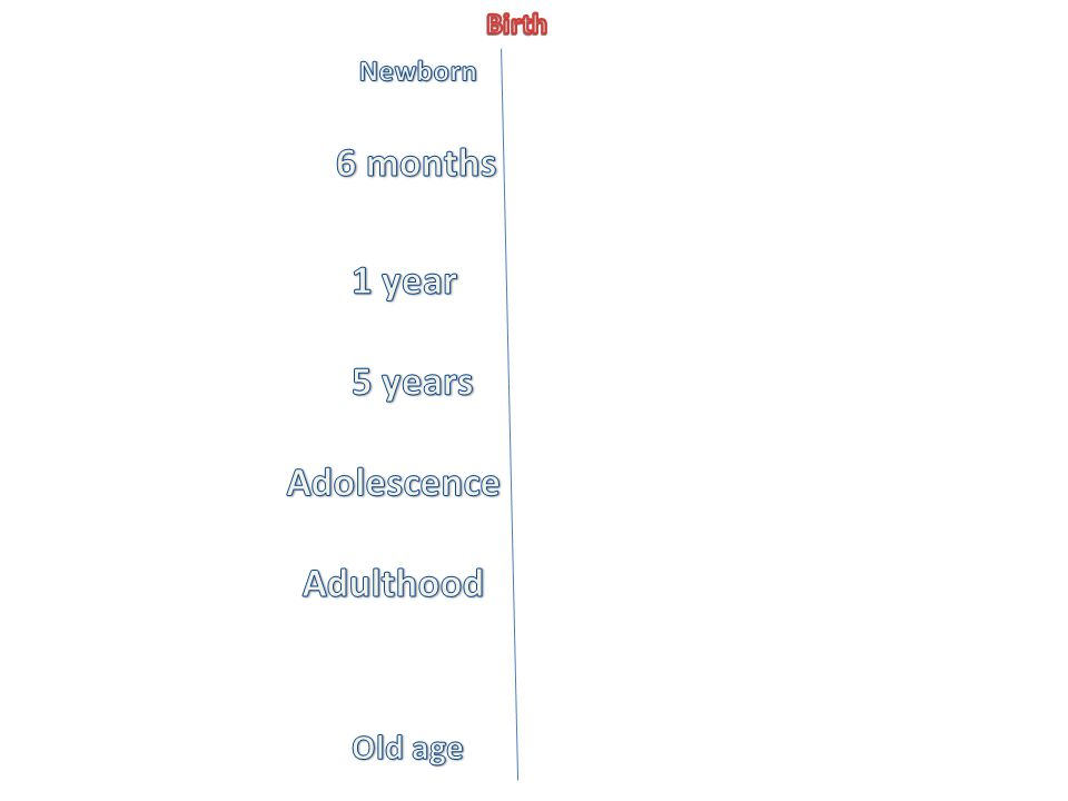 6 months 1 year 5 years Adolescence Adulthood