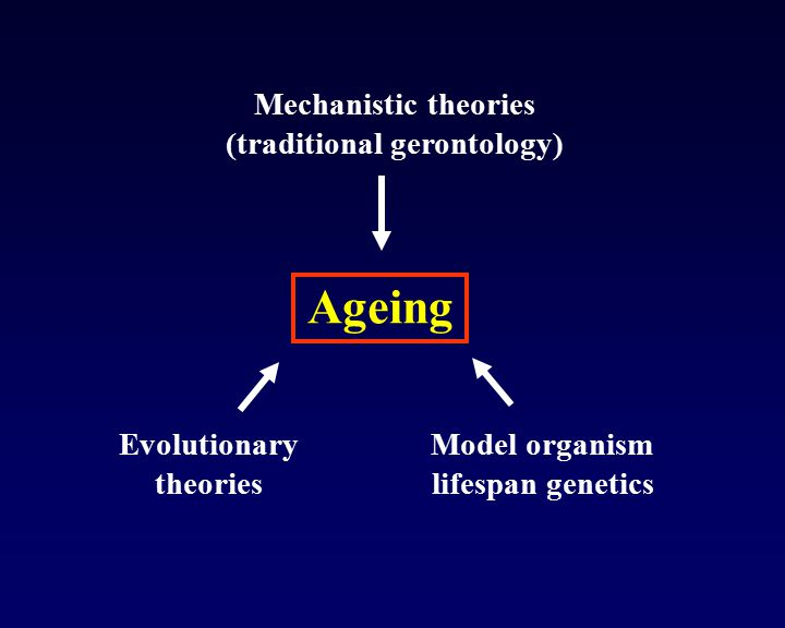 Ageing Mechanistic theories (traditional gerontology)