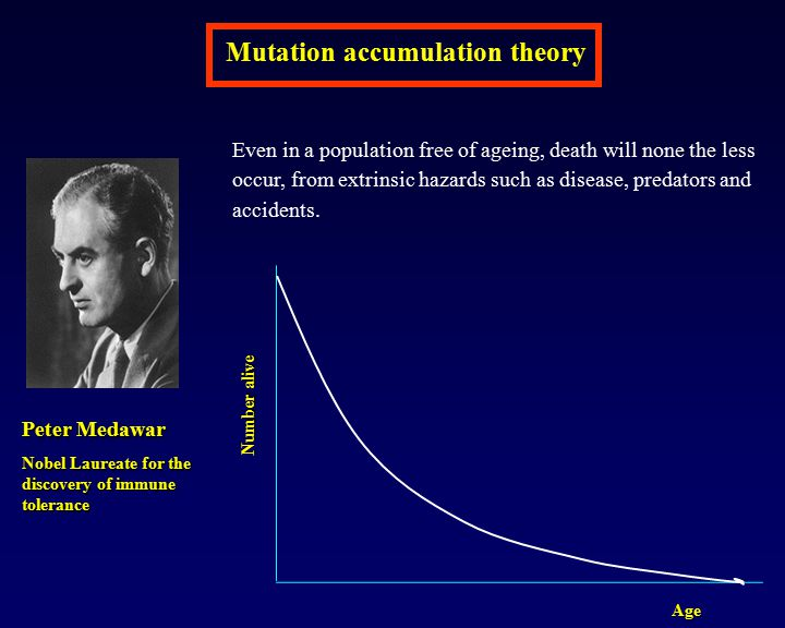 Mutation accumulation theory