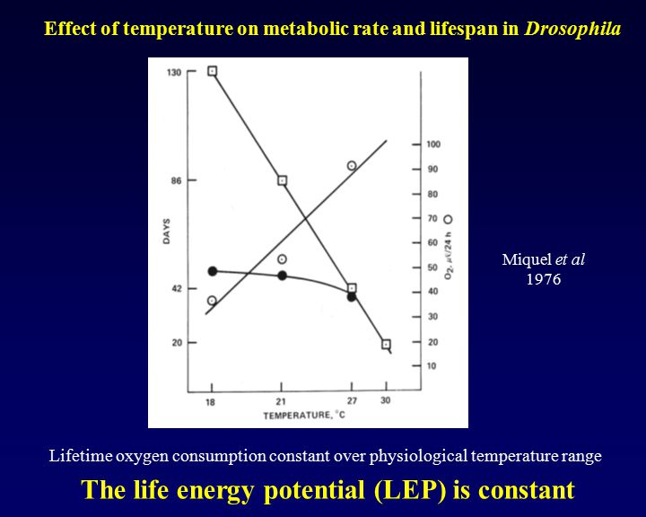 The life energy potential (LEP) is constant