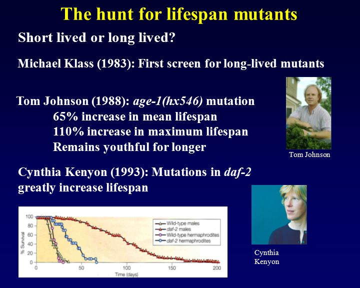 The hunt for lifespan mutants