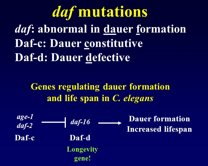 Genes regulating dauer formation and life span in C. elegans