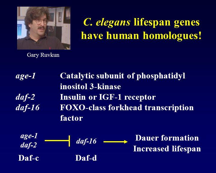 C. elegans lifespan genes have human homologues!