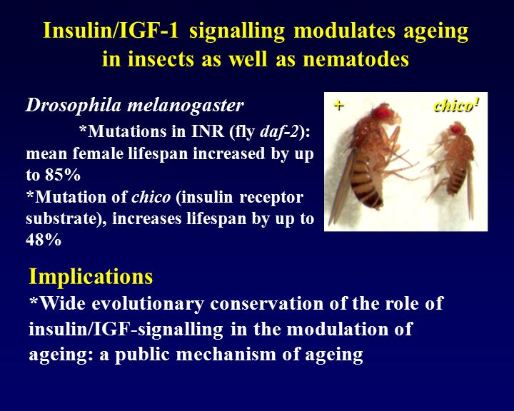 Insulin/IGF-1 signalling modulates ageing in insects as well as nematodes