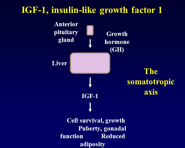 IGF-1, insulin-like growth factor 1