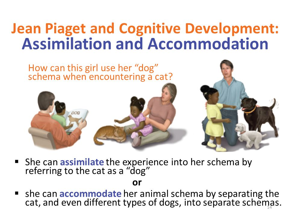 Jean Piaget and Cognitive Development: Assimilation and Accommodation