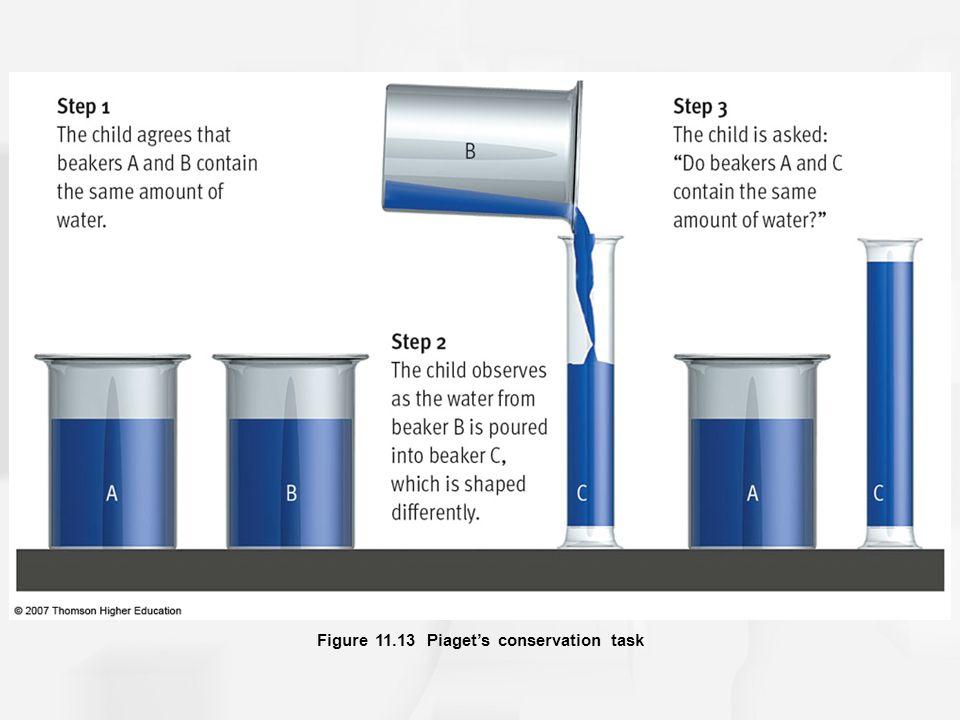 Figure 11.13 Piaget's conservation task