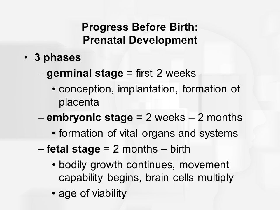Progress Before Birth: Prenatal Development
