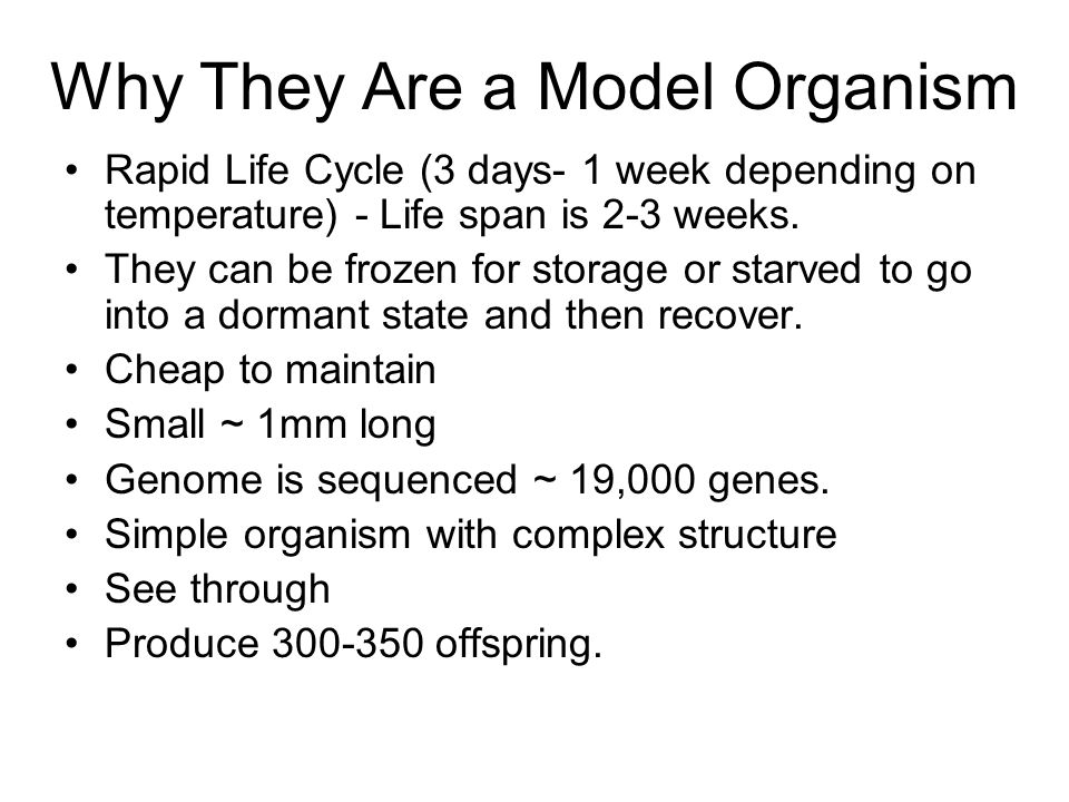 Why They Are a Model Organism