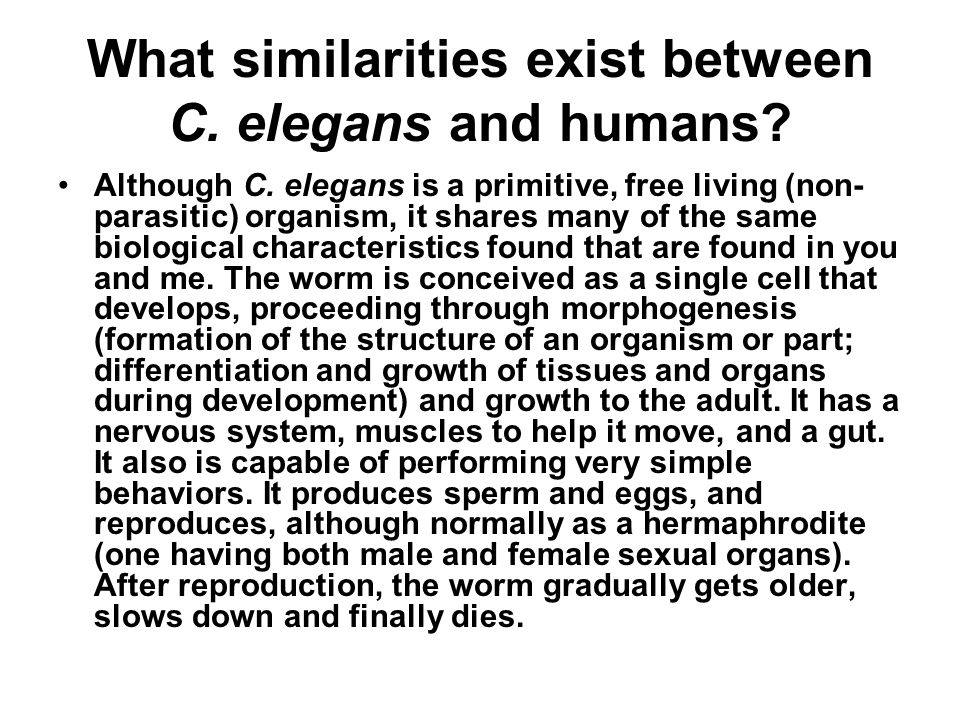 What similarities exist between C. elegans and humans