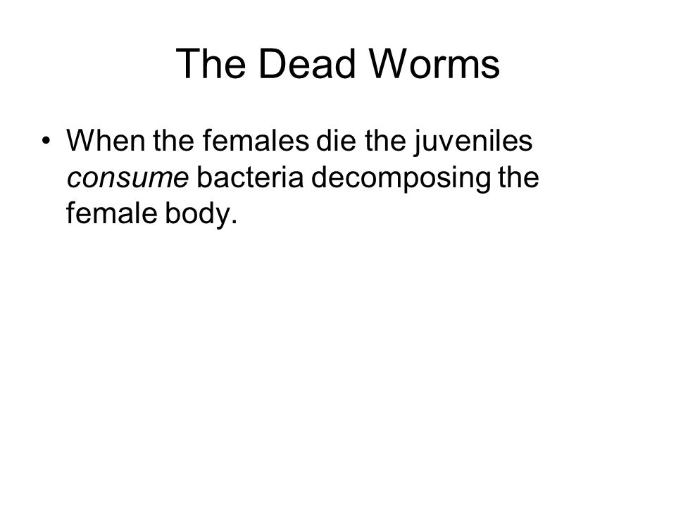 The Dead Worms When the females die the juveniles consume bacteria decomposing the female body.