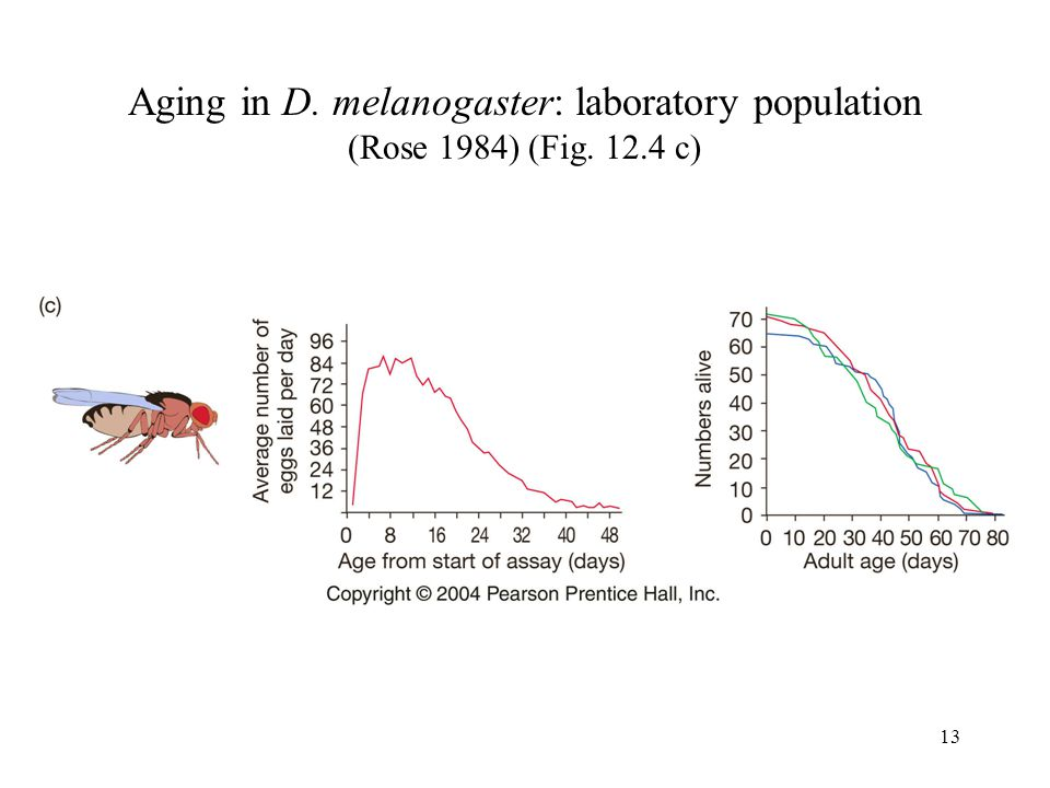 Aging in D. melanogaster: laboratory population (Rose 1984) (Fig. 12