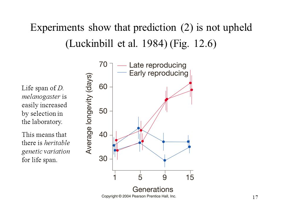 Experiments show that prediction (2) is not upheld (Luckinbill et al