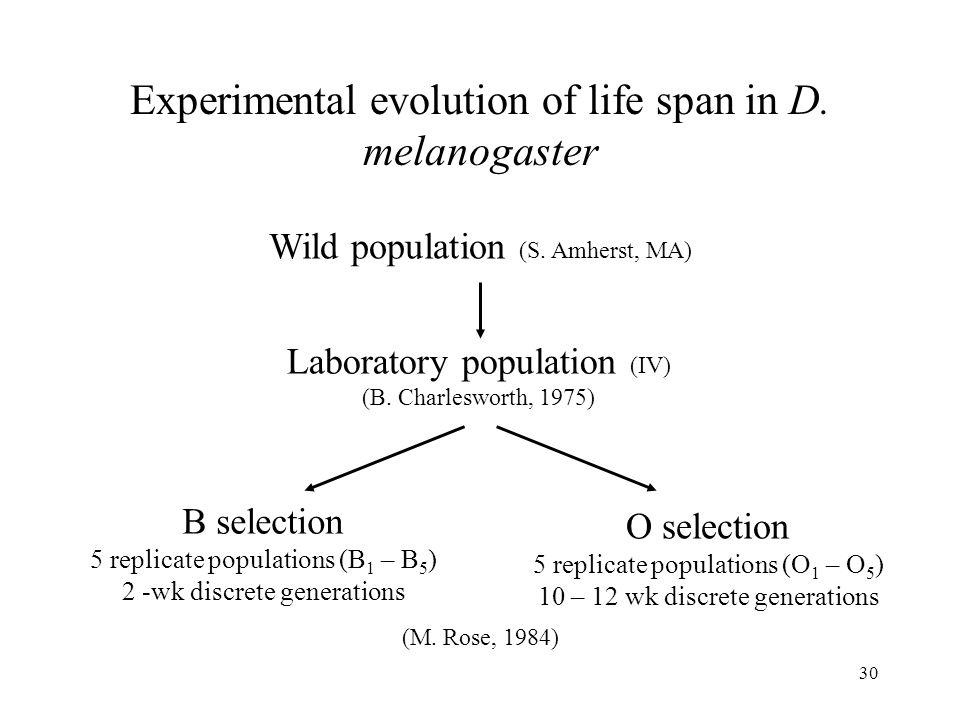 Experimental evolution of life span in D. melanogaster