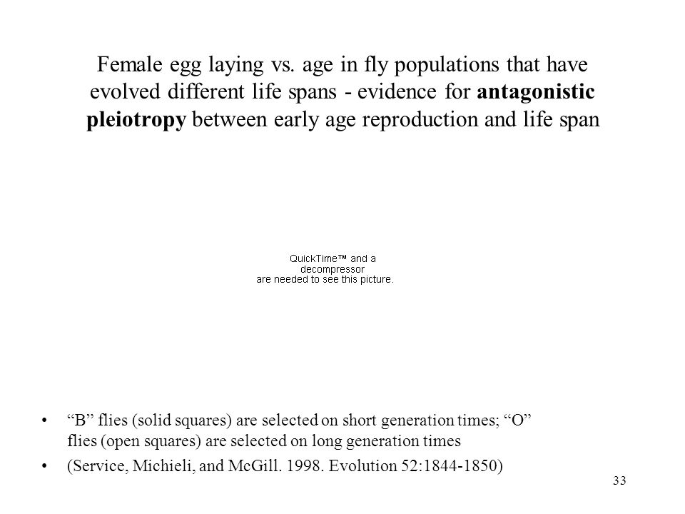 Female egg laying vs. age in fly populations that have evolved different life spans - evidence for antagonistic pleiotropy between early age reproduction and life span
