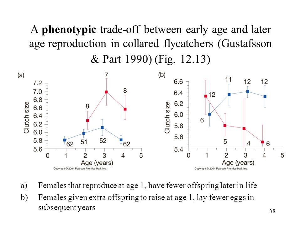 A phenotypic trade-off between early age and later age reproduction in collared flycatchers (Gustafsson & Part 1990) (Fig. 12.13)