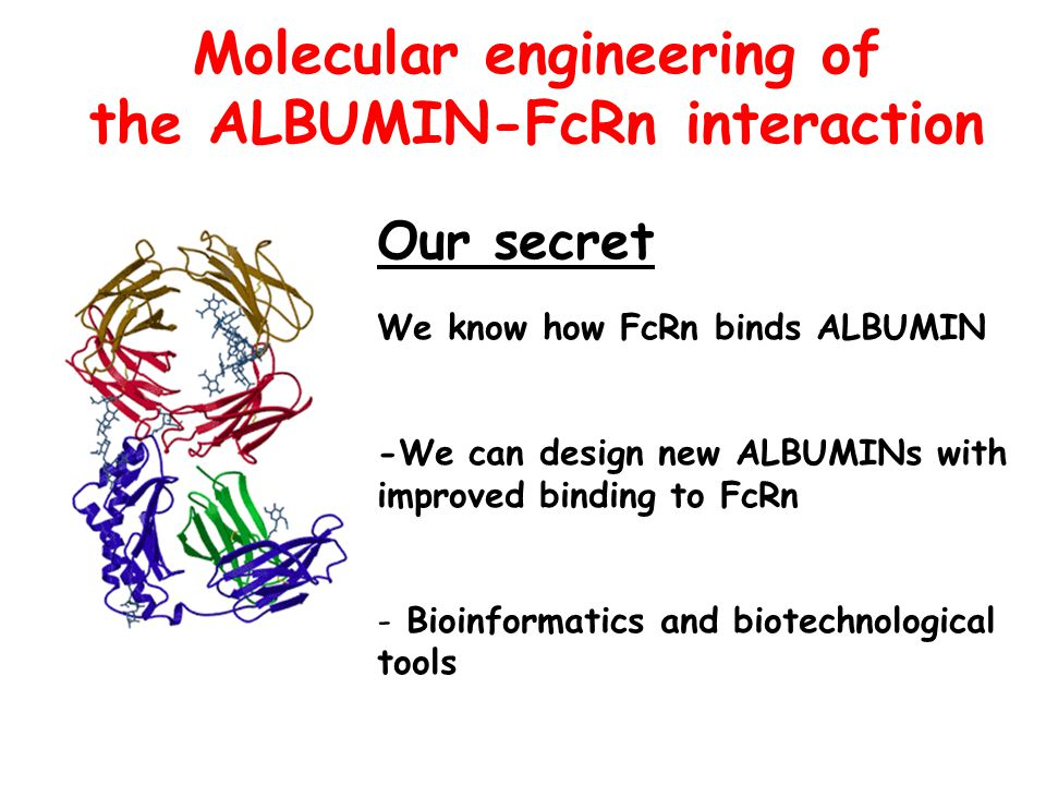 Molecular engineering of the ALBUMIN-FcRn interaction